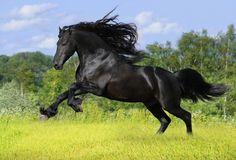 Los Mejores caballos del mundo, fueron elegidos por varias organizaciones basadas en las caracterist...