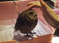 Just so irresistable and such a variety! http://www.awesomelycute.com/2015/02/london-opens-a-bar-where-you-can-pet-owls/
