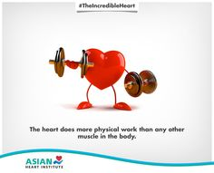 Can you guess which muscle does the most work? That's right! It's your heart. #TheIncredibleHeart