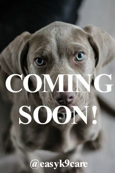 Looking for dog care tips? Look no further! The Easy K9 Care blog is coming soon!
