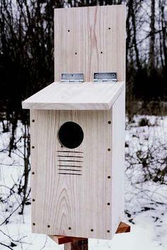 build a screech owl nest box quarto homes
