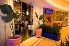 Havana, Restaurant, Plants, Diner Restaurant, Plant, Restaurants, Planets, Dining