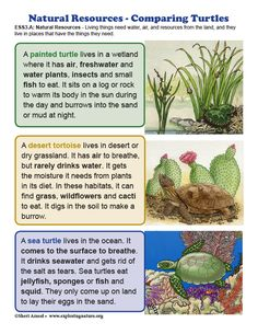 Learn about ecology and science through simple, fun activities on Exploringnature.org Types Of Turtles, Montessori Kindergarten, Turtle Life, Turtle Painting, Biomes, Natural Resources, Water Plants, Teaching Science, Ecology