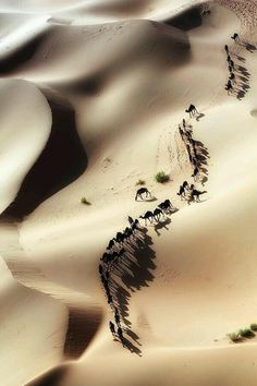 Camels travelling together across sand-dunes.look more like ants. In This World, Wonders Of The World, Aerial Photography, Nature Photography, Desert Dunes, Beautiful World, Beautiful Places, Camelus, Deserts Of The World
