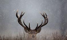 Early-Morning-Frost-Is-Se-001.jpg 460×276 pixels