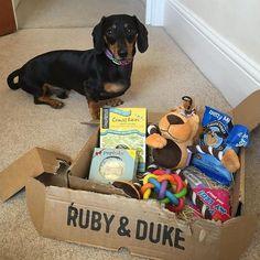 One of our many happy Ruby & Duke #Dukebox dog toy and treat customers @brunotheminidachshund. www.rubyandduke.com  #dogsofinstagram #dogstagram #dogs #dogsrule #doglove #doglovers #doglife #dogoftheday #doggy #doglover #doggie #dogscorner #dogofinstagram #dogsofinsta #dogwalk #dog_features #doggies #dogsandpals #dogloversofinstagram #dogdays #dogsofinstaworld #dogcrushdaily #dogslover