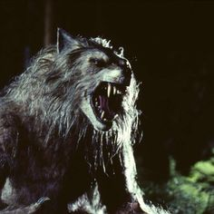 A werewolf in folklore and mythology is a person who shapeshifts into a wolf, either purposely, by using magic, or after being placed under a curse. The medieval chronicler Gervase of Tilbury associated the transformation with the appearance of the full moon, but this concept was rarely associated with the werewolf until the idea was picked up by modern fiction writers.
