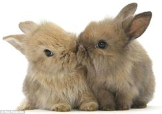 In the event you are looking for a furry friend which is not just adorable, but simple to have, then look no further than a family pet rabbit. Cute Baby Bunnies, Cute Baby Animals, Funny Animals, Cute Babies, Hunny Bunny, Animals Images, Fluffy Bunny, Rabbit Run, Pet Rabbit
