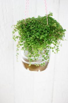 Wasserflaschen Upcycling / Plastic bottle becomes flower pot