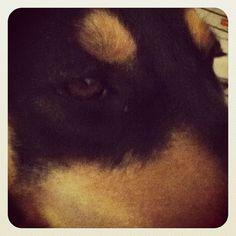 Brown-eyed #pup