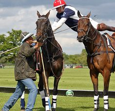 30 great polo images: top photographer Alice Gipps chooses her best polo and equine work - Telegraph