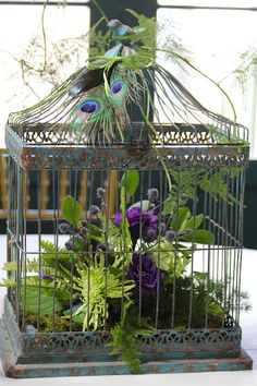Birdcage peacock center piece