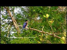 #Sundarban , the beautiful forest of #Bangladesh.  http://www.inbangladesh.it/en/Sundarbans-jungla