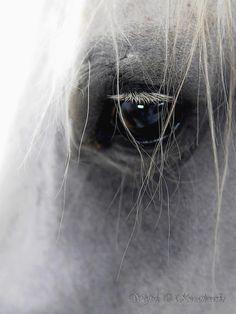 Wisdom. Photo by: Wojtek Kwiatkowski - Equine Photography
