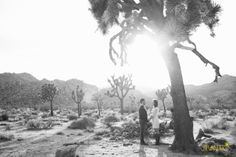 Joshua tree engagement photo.  Adventure with us.
