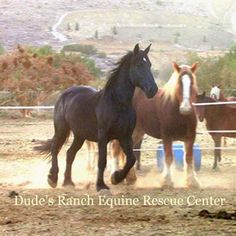 Welcome to Dude's Ranch Equine Rescue Center Ca.