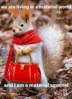 Little Red Riding Squirrel - pets & animals Animals And Pets, Baby Animals, Funny Animals, Cute Animals, Animal Fun, Beautiful Creatures, Animals Beautiful, Animal Pictures, Cute Pictures