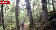 Homem Tem Encontro Indesejado Enquanto Fazia Corrida No Bosque