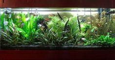 Why not all aquarium LED lights for planted freshwater aquariums are equal 75 Gallon Aquarium, Aquarium Led, Led Aquarium Lighting, Reef Aquarium, Planted Aquarium, Freshwater Plants, Freshwater Aquarium, Fish Tank Design