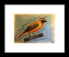 Cape Robin Framed Print by Kelly Goss Oil Pastel Drawings, Robin Bird, Wall Art For Sale, Wild Dogs, Bird Art, Special Gifts, Cape, Spice, Wildlife