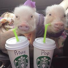 Priscilla and Poppleton hail from Ponte Vedra Beach, FL, where they live with their loving (human) mother. The pair, inseparable siblings, have more than 300k Instagram followers, and one look at their cute, little pink snouts, and it's easy to understand the loyal following. In fact, the duo is so