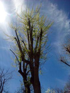 Los árboles agradecen el Sol. bebeteca.