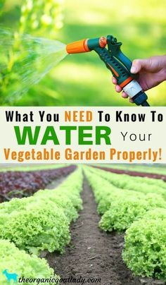 Gardening Tips, Garden Soil, What You NEED To Know To Water Your Vegetable Garden Properly, Watering Vegetable Garden, How To Water a Garden #gardensoiltips #vegetablegardeninginspiration