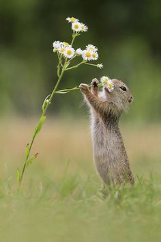 Hmm … Dat Smell! by Julian Rad European Ground Squirrel