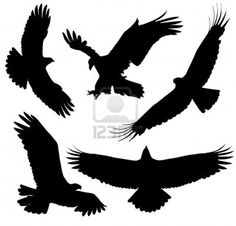Eagle Silhouette On White Background Royalty Free Cliparts, Vectors, And Stock Illustration. Image 15881957.