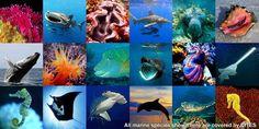 (20) #WorldOceansDay hashtag on Twitter