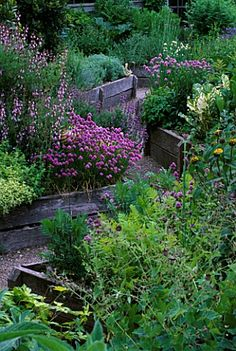 THE_ABBEY_HOUSE_WILTSHIRE_RAISED_WOODEN_BEDS_IN_THE_HERB_GARDEN_WITH_FLOWERING_CHIVES