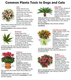 Flowers and plants poisonous to cats Houseplants not toxic to cats