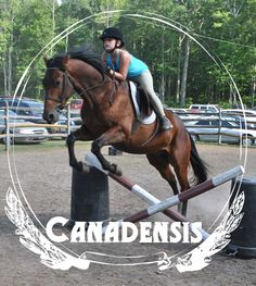Camp Canadensis has onsite stables with horses for ring and trail riding...plus jumping!