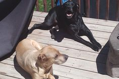StubbyDog: stories - Chase and Bella live with two little girls
