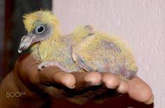Dove - prabhuclicks