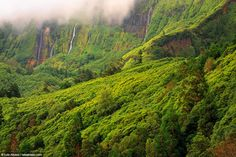 Ilha das Flores: a beleza verde do ponto mais ocidental da Europa - via Green Savers 11.02.2016   #Azores #Portugal Um dos locais mais belos do Portugal é, paralelamente, o seu ponto mais ocidental – e também da Europa. Conheça melhor a Ilha das Flores.