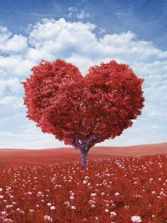 My heart tree that I shaped with my snippy sharp scissors ALL BY MYSELF! I Love Heart, With All My Heart, Happy Heart, Love Is All, My Funny Valentine, Valentines Day, Valentine Tree, Valentine Images, Heart In Nature