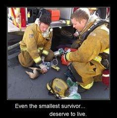 Incluso el superviviente más pequeño merece vivir
