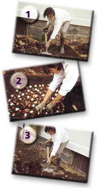 Πώς φυτεύουμε βολβούς