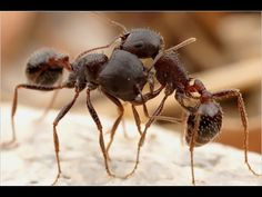 Documentary On Insects  struggle