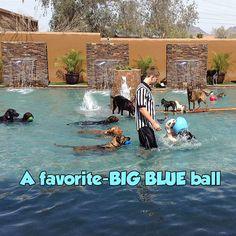 Video   Always Unleashed Pet Resort   Dog Boarding Scottsdale   Dog Day Care Scottsdale AZ