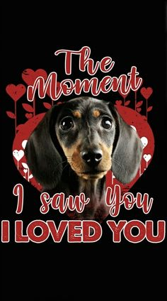 Dachshund Quotes, Dachshund Art, Funny Dachshund, Daschund, Dachshunds, Sign Quotes, Dog Food, Bowie, Animal Pictures