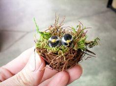 Wee little birds