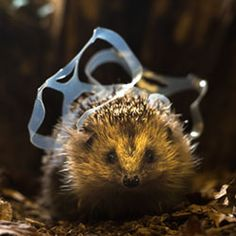 Gallery: impact of litter on wildlife by Chris Packham