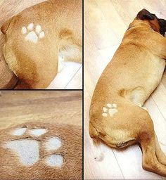 The Latest Craze to Hit the Pet World: DOG Tattoos! - Paperblog