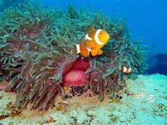 malaysia fishes - : Yahoo India Image Search results