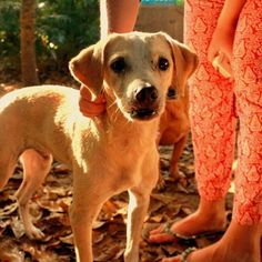 Our little baby Putschu #dogsofinstagram #doglovers #retreatbelanatureza #animallove #dogstagram #petstagram  #dogs #bahia #brazil