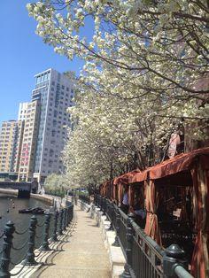 Providence Riverwalk in Spring