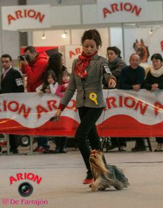 @Arion_ES @defarrajon, impresionantes fotografías de #Exposición #Canina #Internacional #Martorell
