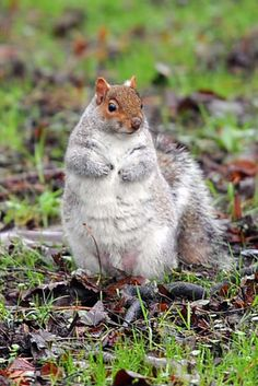 FAT SQUIRRELS! | Squirrels Around The World Have Got Really Fat Because Of The Unseasonably Warm Winter